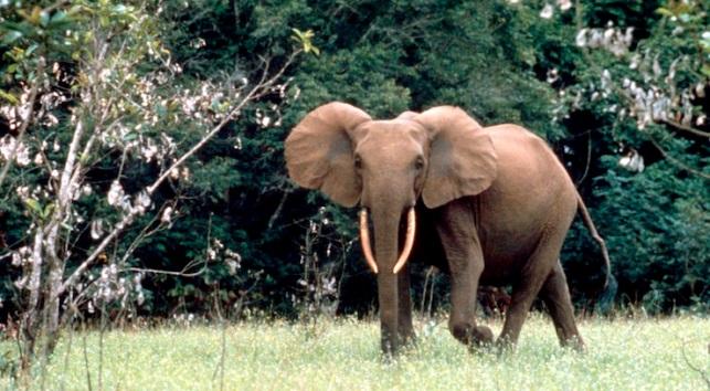 Pronatura Elephant Forest Sanctuary
