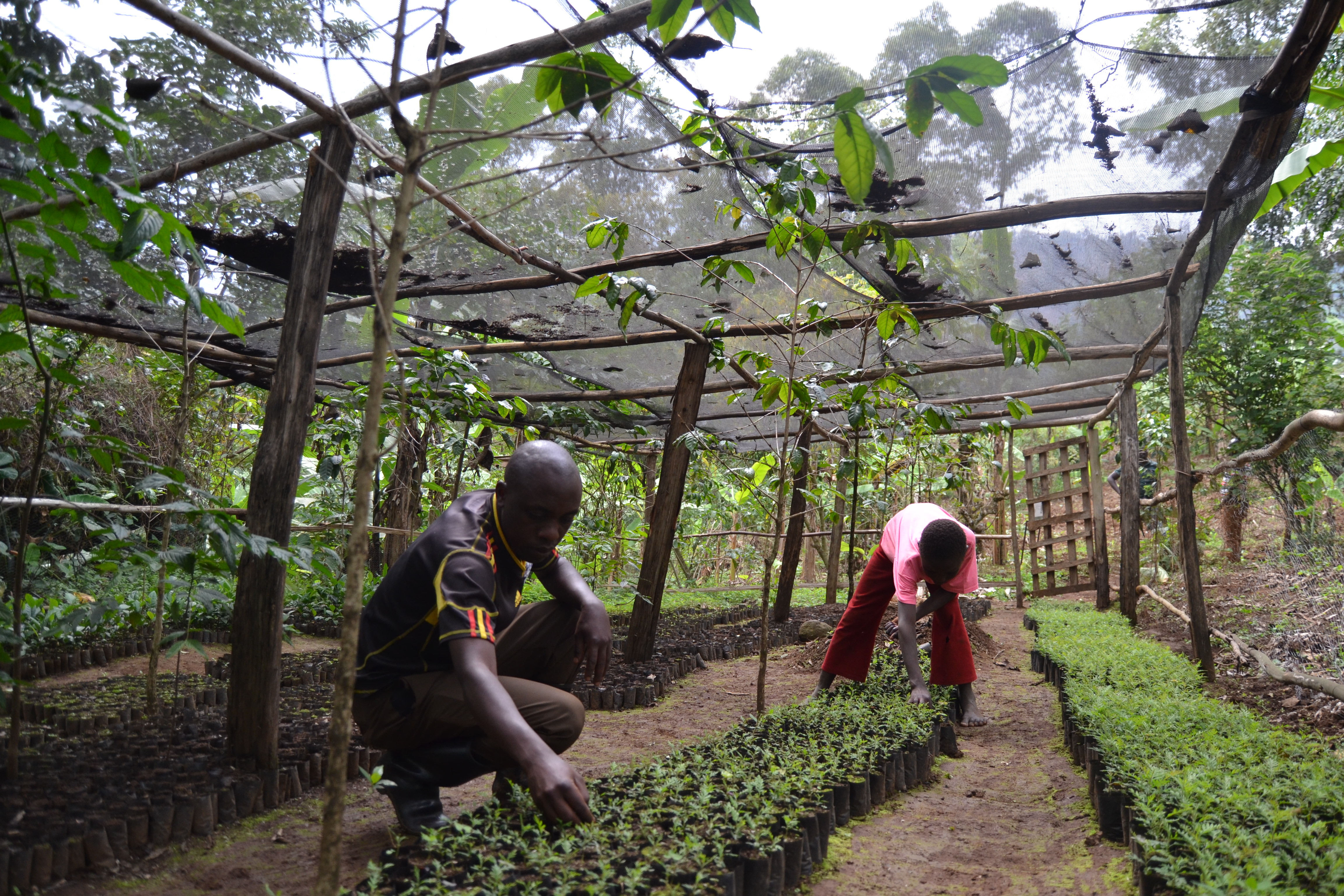 What is the Mbale Trees Programme?
