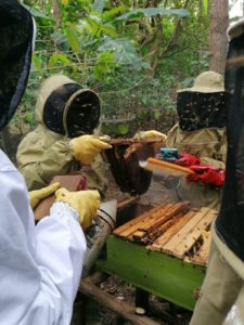 Farmers being taught how to harvest honey
